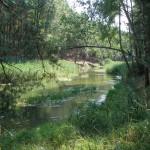 Лебедевка лес
