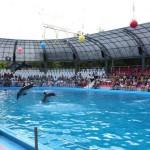 дельфинарий-немо
