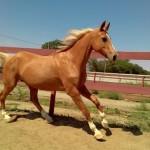 конный клуб Серебряная подкова