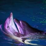 ночное шоу в Дельфинарии Одесса